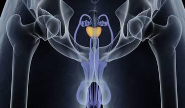 ¿Por qué necesitamos una glándula prostática?
